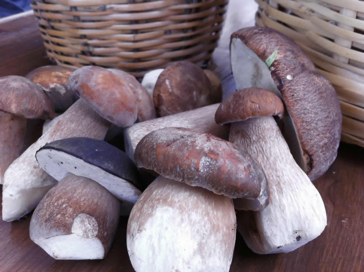 Τα πρώτα καλογεράκια )βωλίτης ο χάλκειος) στην περιοχή | Εστιατόριο Λίθος